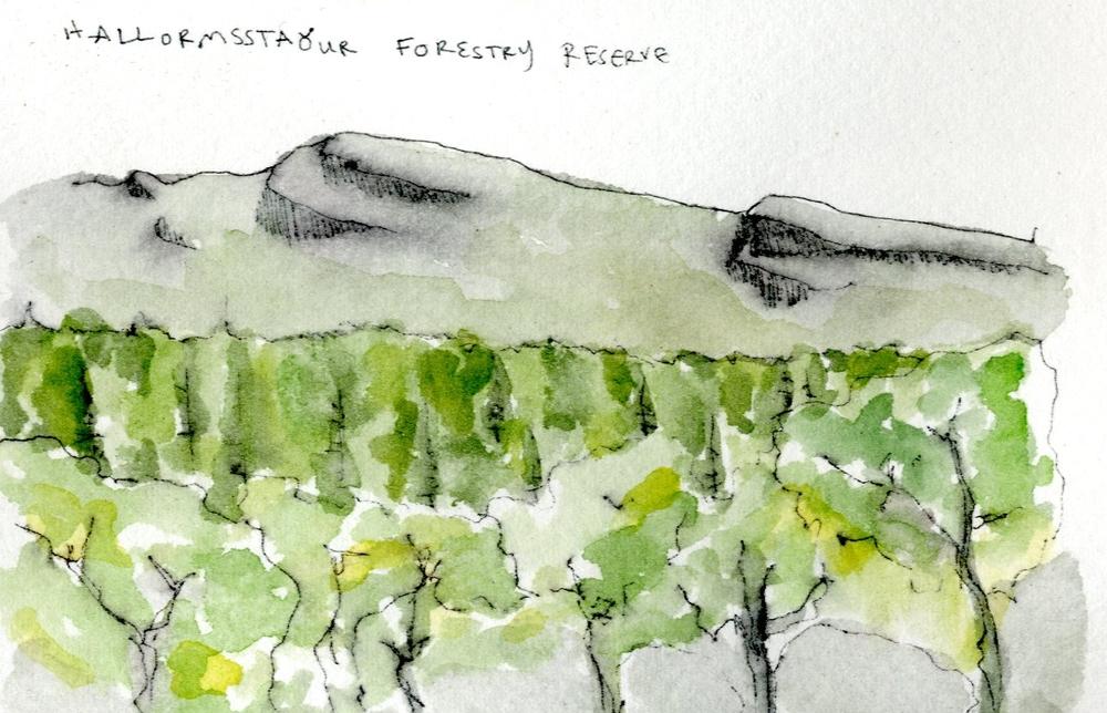 Hallormsstadur Forest Reserve.jpg