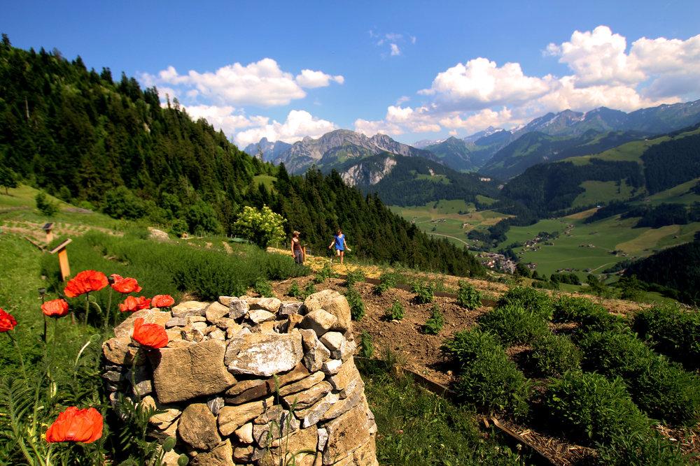 Pays d'Enhaut, Lake Geneva Region © Joanne DiBona