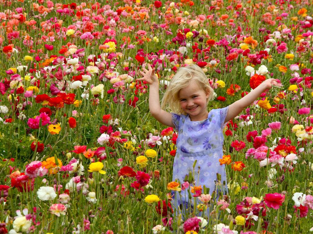 Child, Flower Fields.jpg