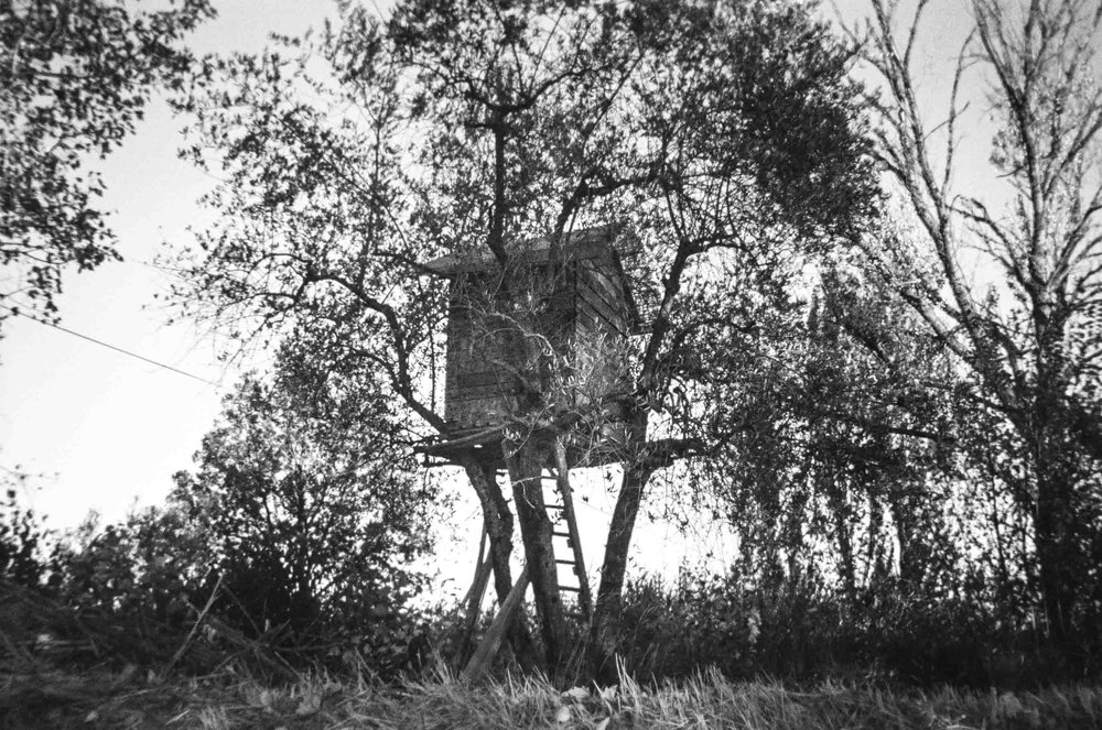 We discover a rickety tree house nestled in an olive tree