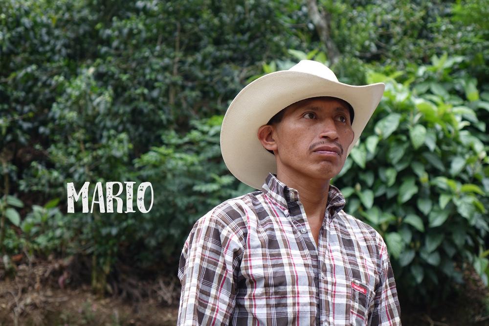 Mario FVH.jpg