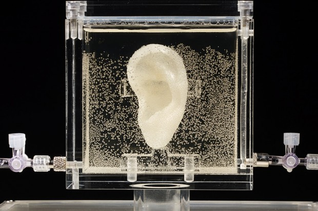 3D print of Vincent van Gogh's ear. Source: Diemut Strebe
