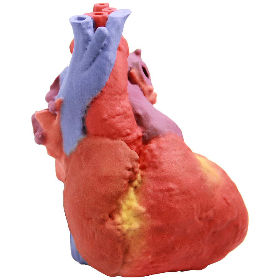 60106-Heart Muscle.png