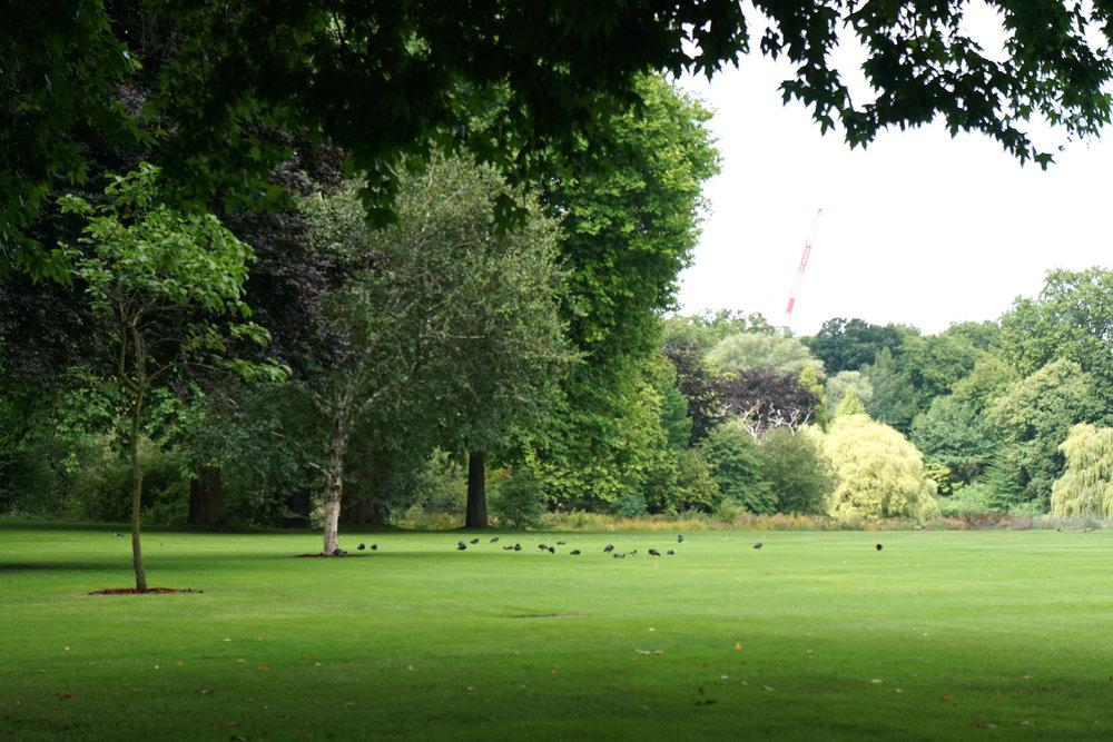 Garden @ Buckingham Palace