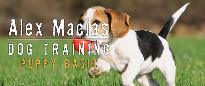 Dog Obedience Training South Orange County Ca