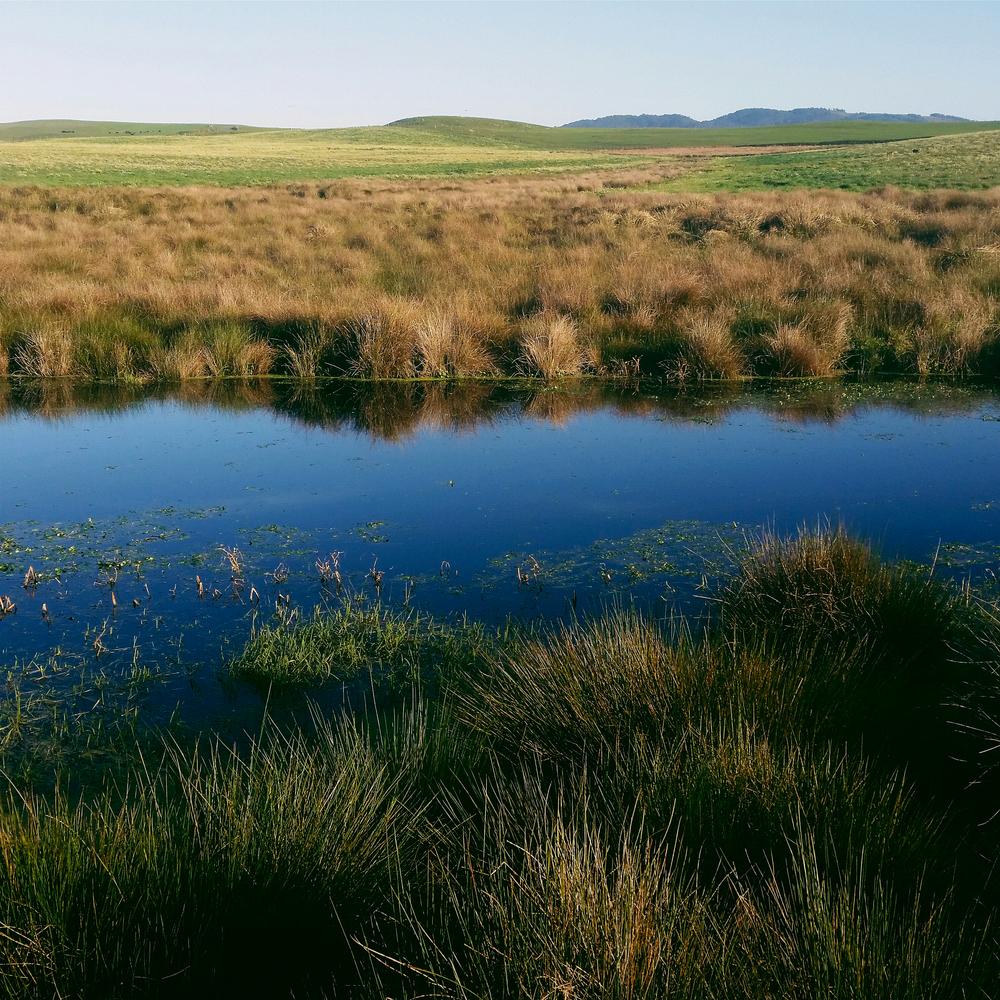 15-water-vivianchen-074018.jpg