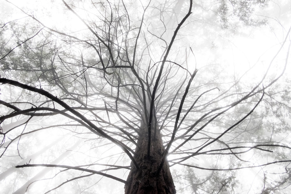 joaquin-miller-park-oakland-vivianchen-7510.jpg