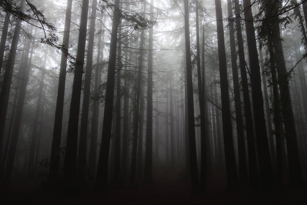 joaquin-miller-park-oakland-vivianchen-7504.jpg