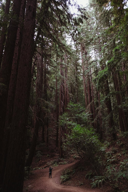 redwood-oakland-vivianchen-6089.jpg
