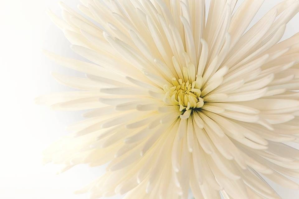 flower_1.jpeg