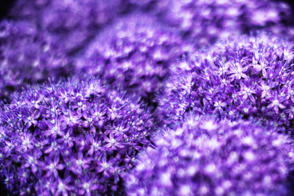 Purple Flower_Final.jpg