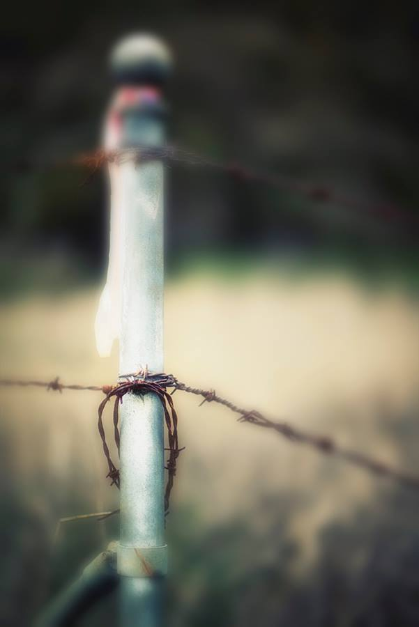barbed wire2.jpeg