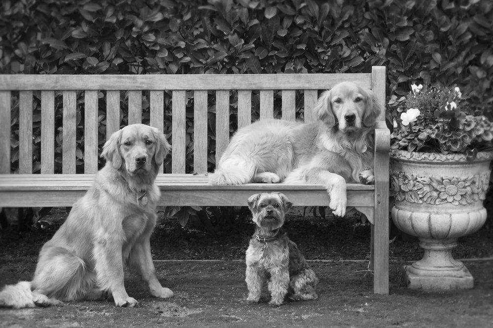 3 dogs_web.jpg