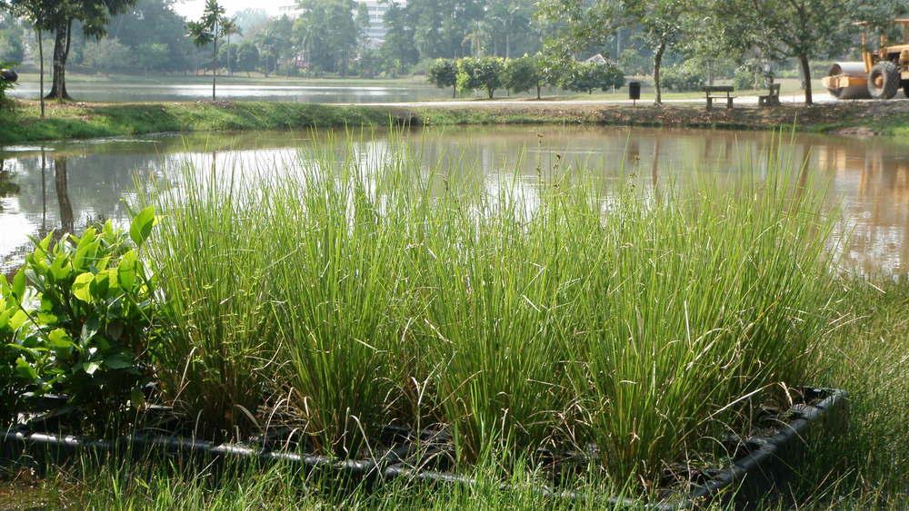 wetlands (16).jpg
