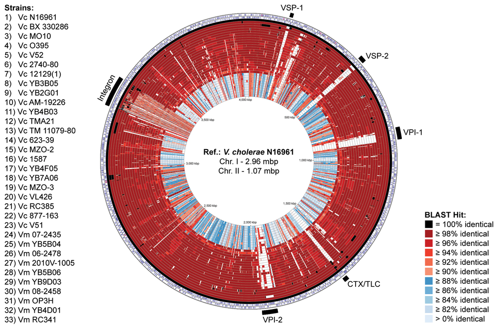 Whole genome BLAST atlas of various  V. cholerae  (Vc) and  V. metoecus  (Vm) strains (from  Orata  et al. , 2015 )