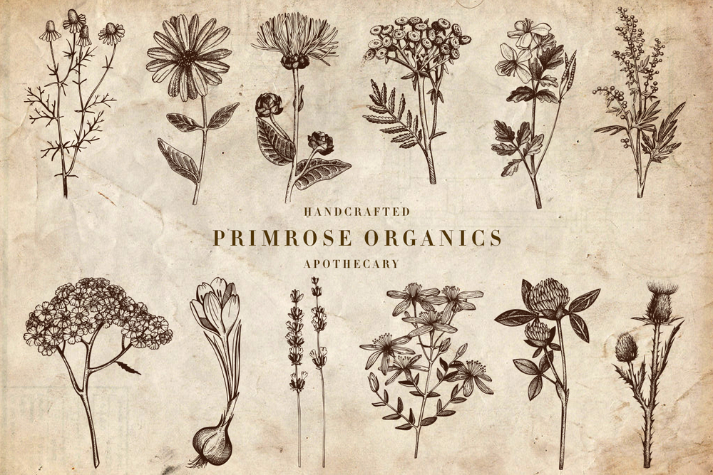 Welcome to Primrose Apothecary   Primrose Apothecary is a Botanical council focused on customizing herbal and aromatic remedies supporting individual health and wellness  We are located at 1627 NE Alberta St. Portland Oregon 97211 suite #4  971) 258-8022