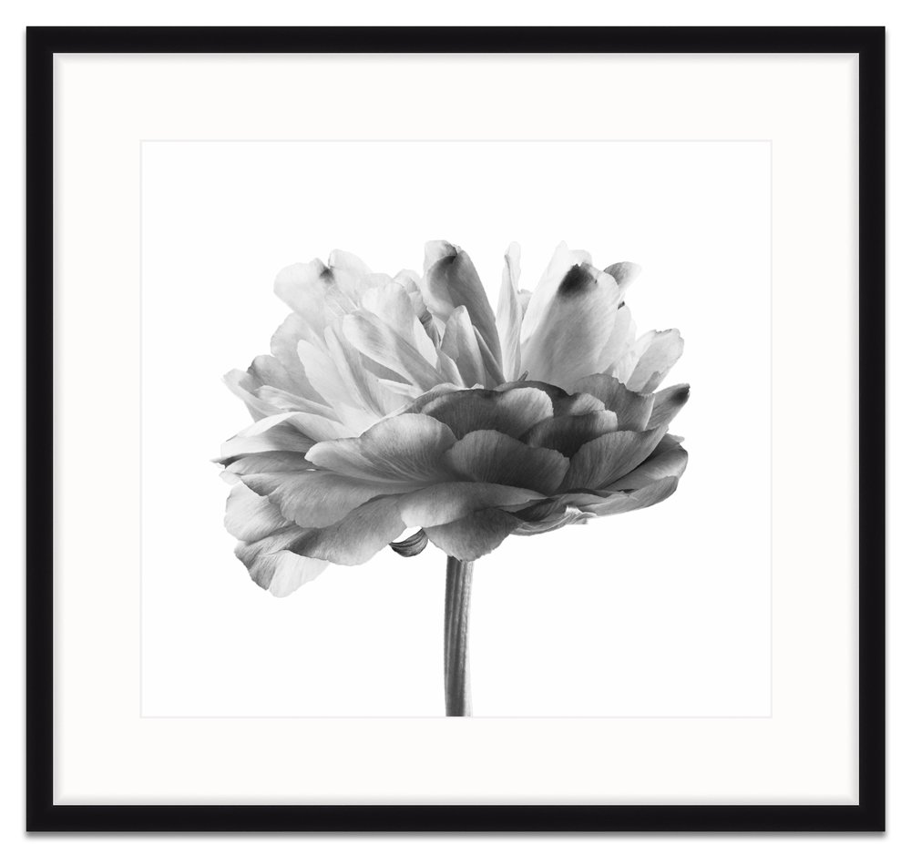 black and white peony in mercer slim.jpg