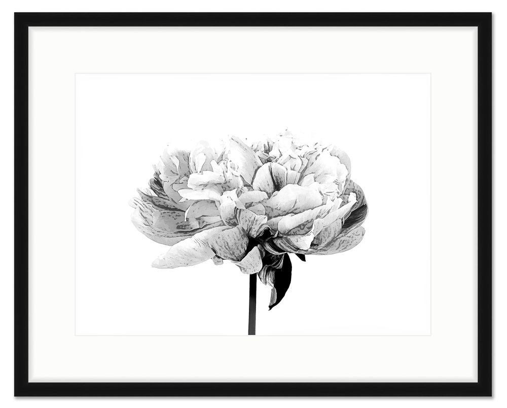 framed white and black peony 2.jpg