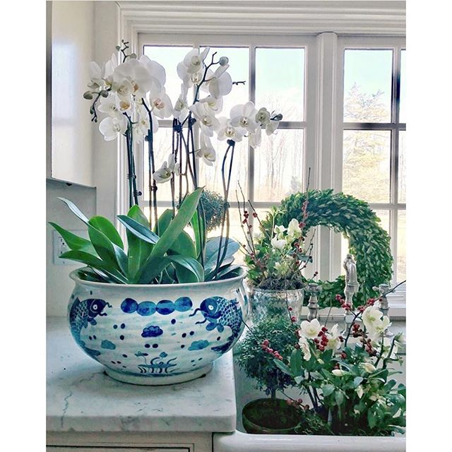 Photographer and TPP customer @peggygarbus purchased this gorgeous orchid bowl from my shop and just look at the glorious orchids with which she's filled it!  I have only fair results with orchids, so I'm hoping she'll give me some tips.  Not a surprise she's a photographer — isn't this a lovely shot? . . . . #blueandwhite #blueandwhiteforever #blueandwhitedecor #orchids #orchid #orchidsofinstagram #orchidlover