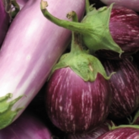 Very purple aubergines