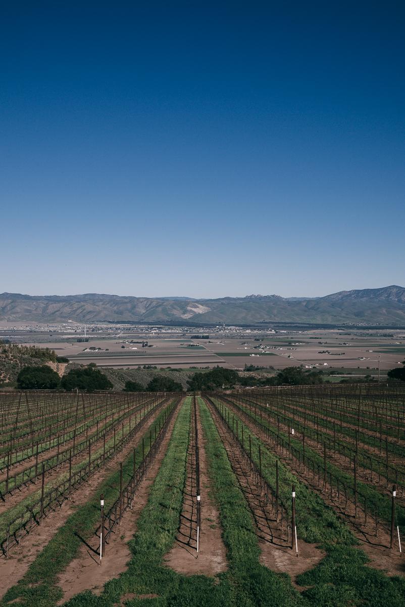 monterey-vineyards-winery-ventana-2.jpg