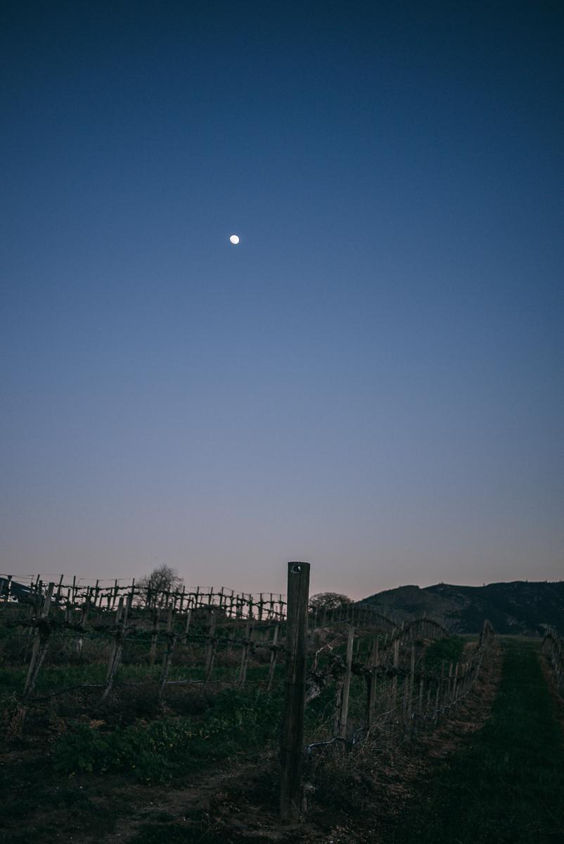 chalone-vineyards-soledad-monterey-getaway-15.jpg
