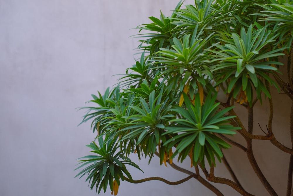 mybelonging-tommylei-warbyparker-palmcanyoncollection-abbotkinney-9.jpg