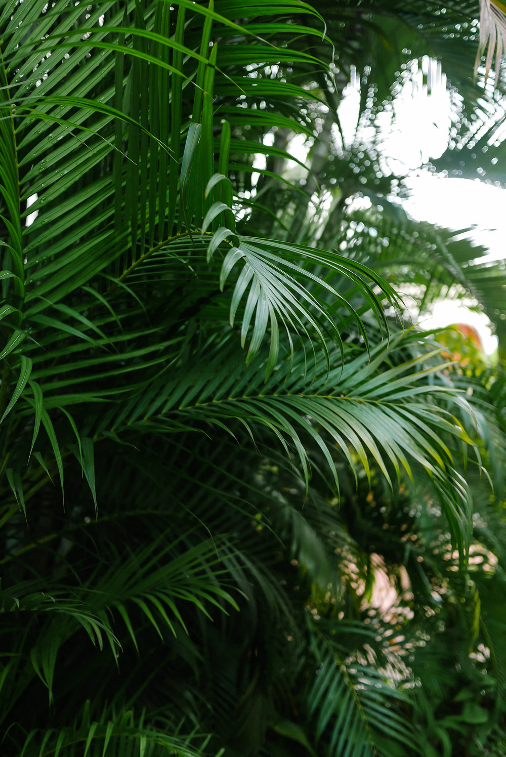 MYBELONGING-TOMMYLEI-DOMINICAN-REPUBLIC-UNESCO-SANTO-DOMINGO-TRAVEL-PHOTOGRAPHY-63.jpg