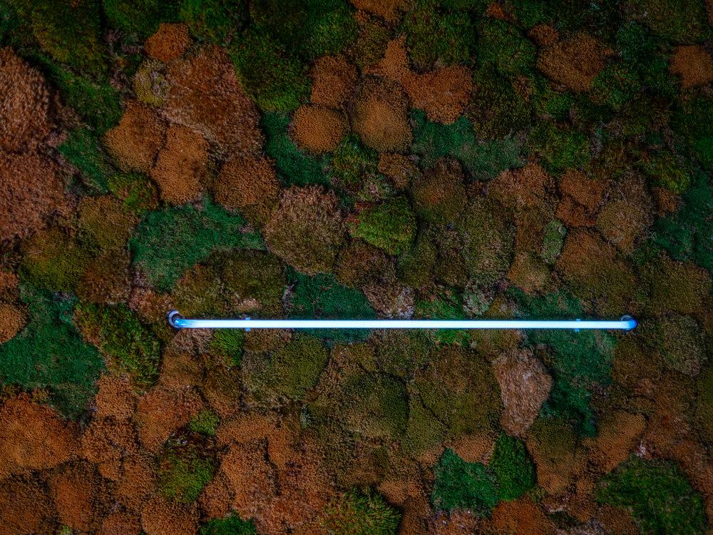 The earthy, green moss that inhabits the interiors of Giorgi Porgi.