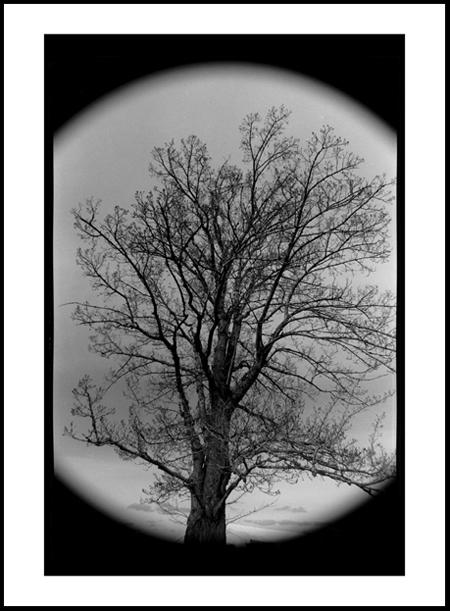 Tree3Positive.jpg