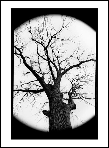 Tree5Positive.jpg