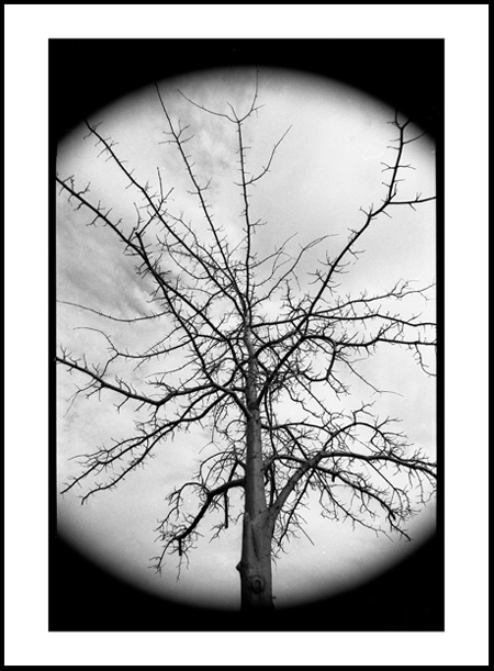 Tree7Positive.jpg