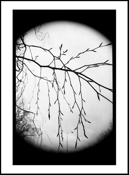 Tree8Positive.jpg
