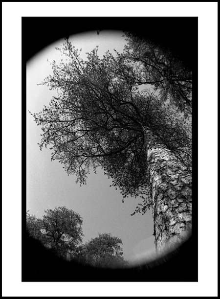 Tree9Positive.jpg
