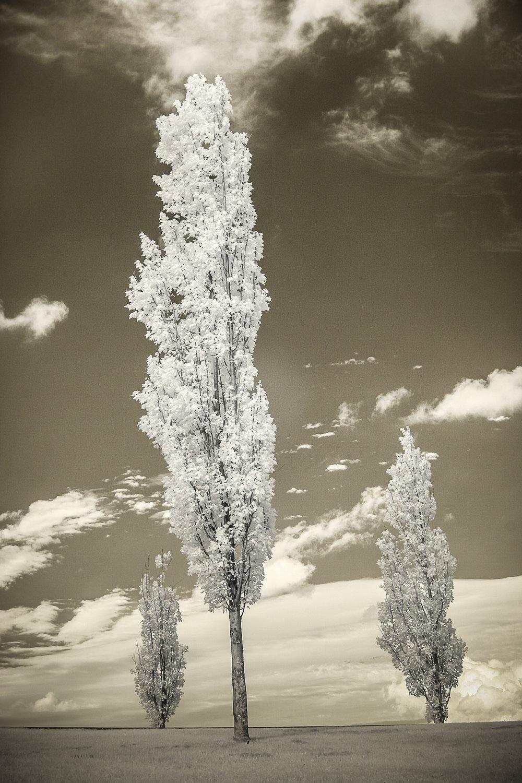 KendallInfraredLandscapes-3.jpg