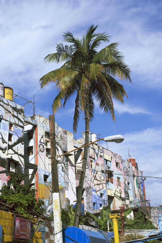 Santeria Palm