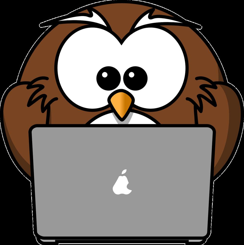 owl at a computer