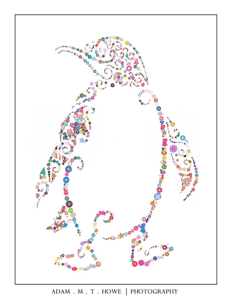 buttons-penguin-adam-howe-photography-46.jpg
