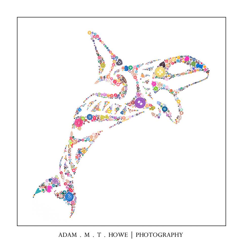 buttons-orca-killer-whale-adam-howe-photography-45.jpg