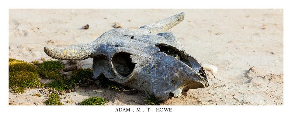 bull-skull-falkland-islands-adam-howe-photography-111.jpg