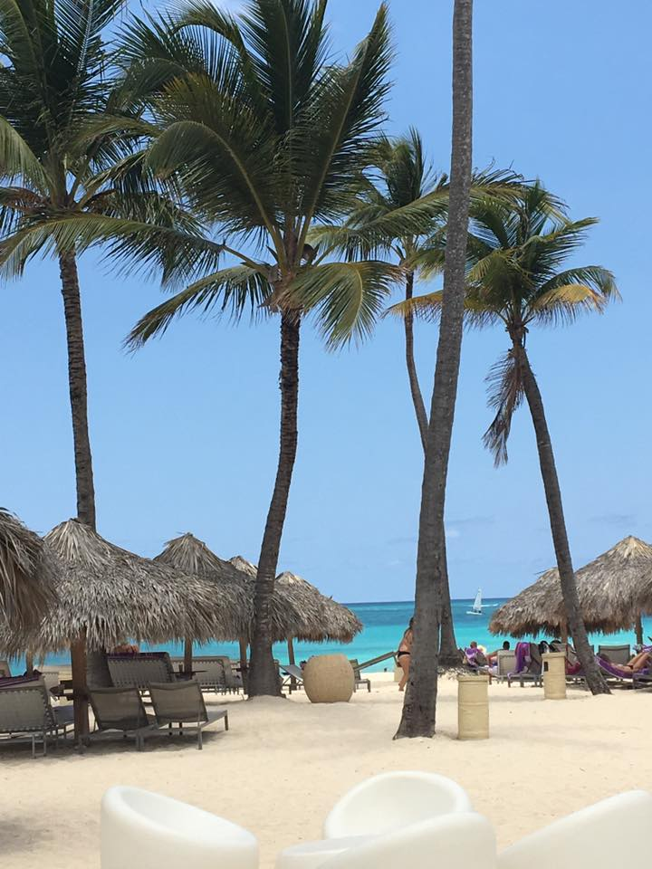 paradisus punta cana palm tree.jpg