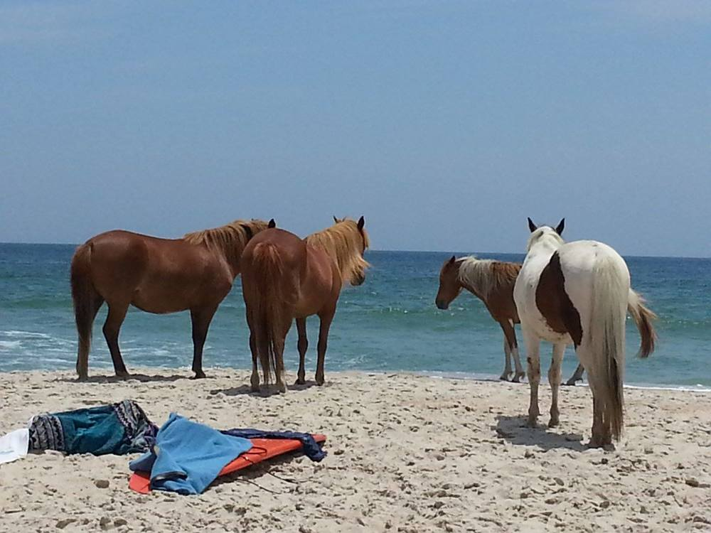 assateague.jpg