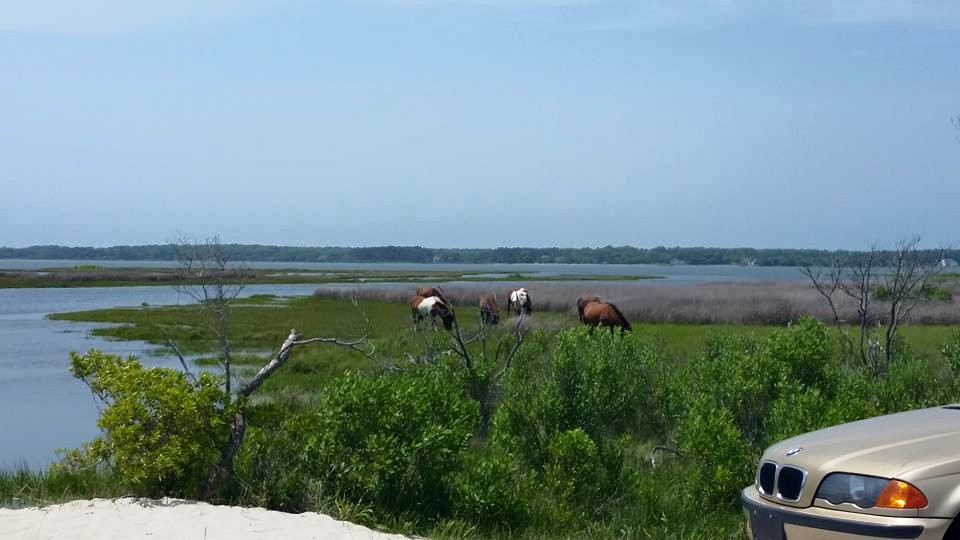 oc assateague island.jpg