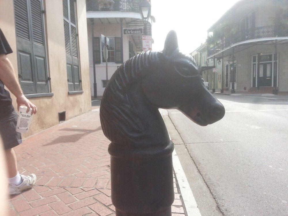 nola horse.jpg
