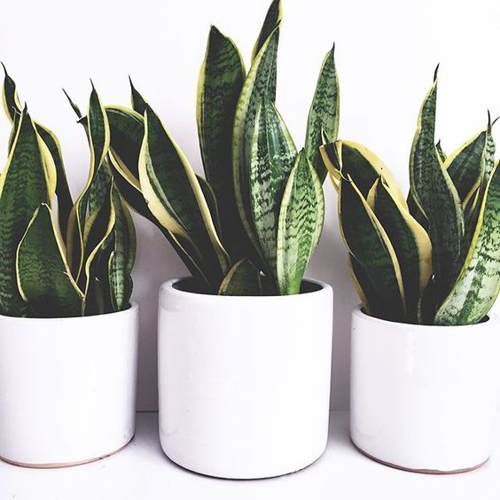 buy a plant - sometimes you need to be in charge of something's life to make you feel like living. A plant that is hard to kill, purifies the air, and doesn't need anything more than water seems like a great start. I got mine here.