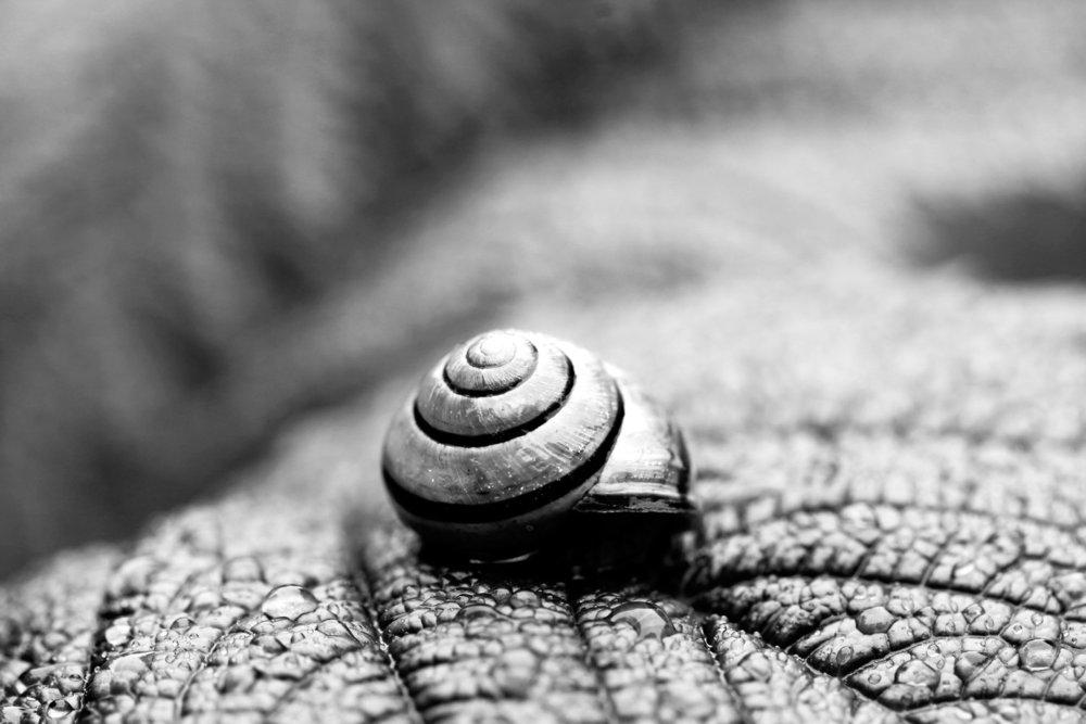 snail+bw+8x12.jpg