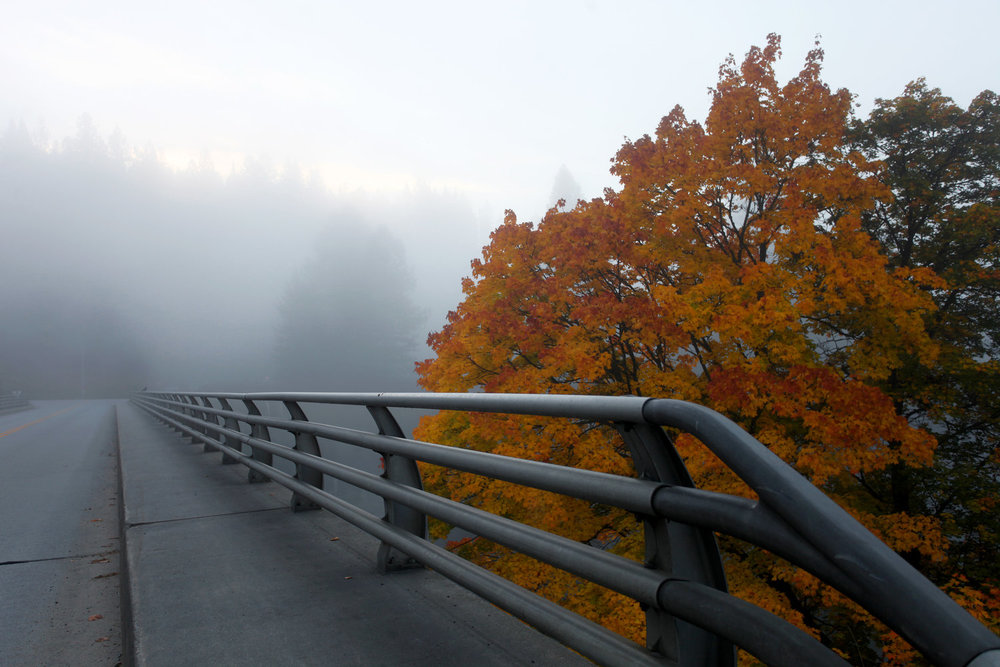 Into+the+Mist+8x12.jpg