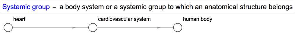 anatomy_systemic_group.png