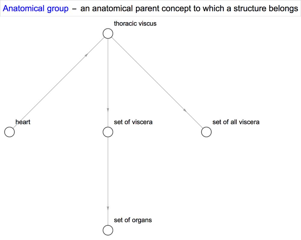 anatomy_anatomical_group.png