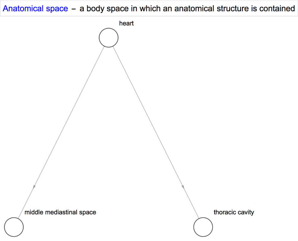 anatomy_anatomical_space.png
